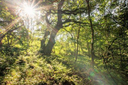 Celtic rainforest news 02
