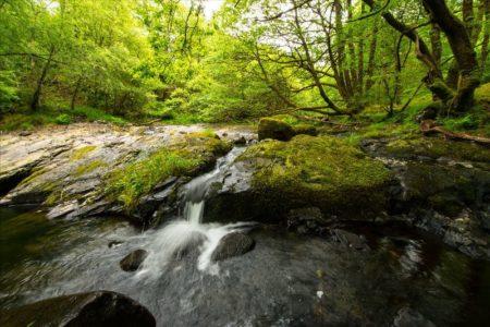 Celtic rainforest news